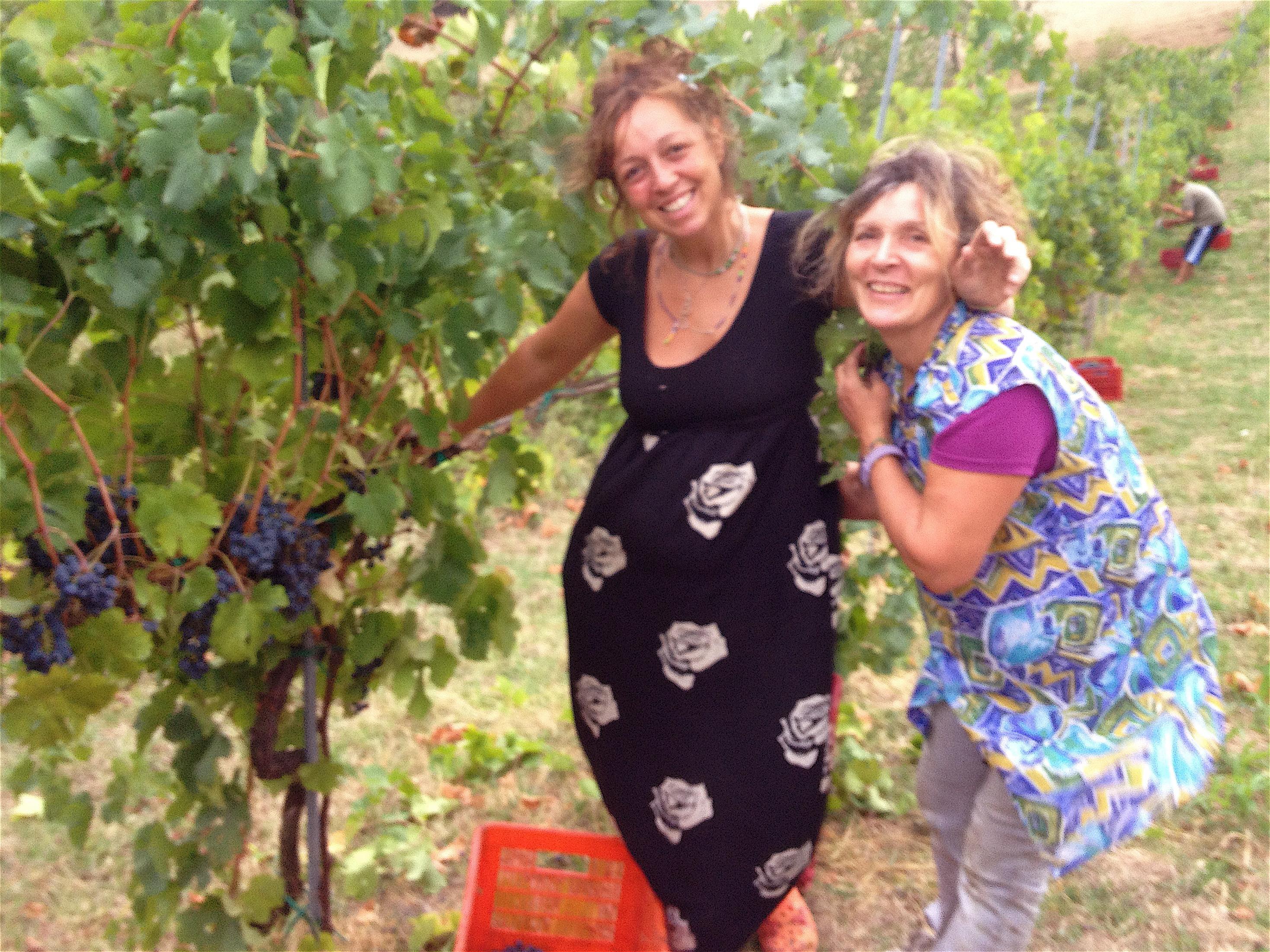 Agriturismo-Ca-Isotta-produzione-vini